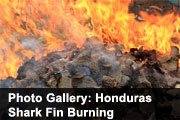 Photo Gallery: Honduras Shark Fin Burning