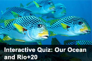 Interactive Quiz: Our Ocean and Rio+20