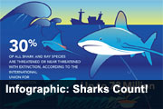 Infographic: Sharks Count